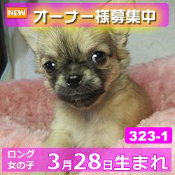 323_1_top