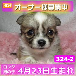 324_2_top