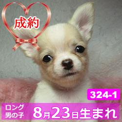 324_1_top
