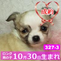 327_3_top