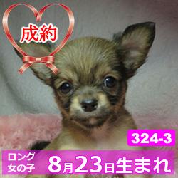 324_3_top