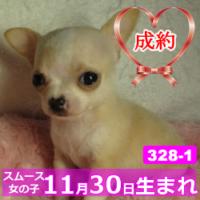 328_1_top
