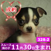 328_2_top