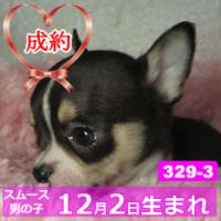 329_3_top