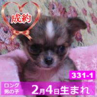 331_1_top
