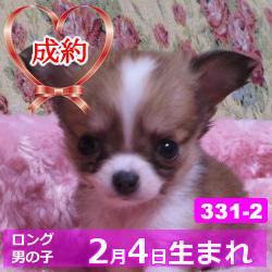 331_2_top
