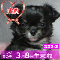 332_2_top