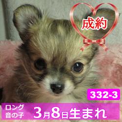 332_3_top
