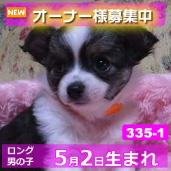 335_1_top