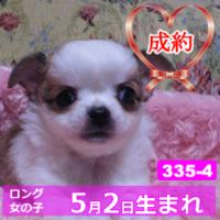 335_4_top