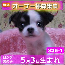 336_1_top