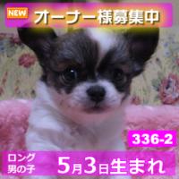 336_2_top