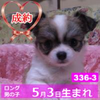 336_3_top