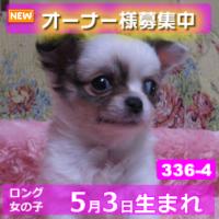 336_4_top